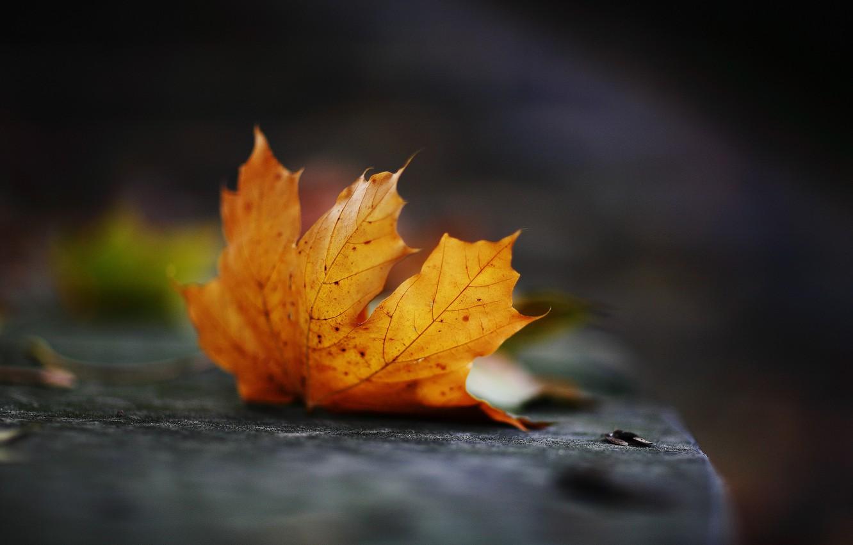 Фото обои осень, лист, Октябрь