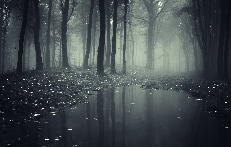 Обои misty, forest, Road. Природа foto 19