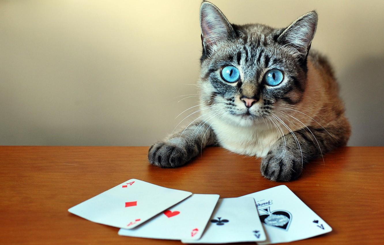 Как играть в карты в кота играть онлайн казино слоты
