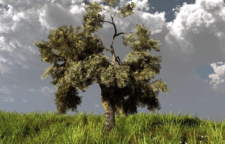 Фото обои трава, тучи, природа, дерево, холм, арт, klontak