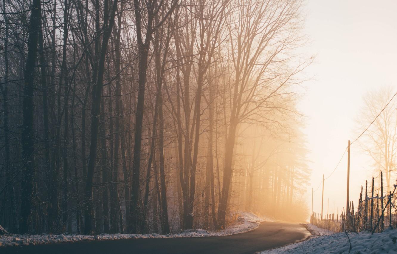Фото обои зима, дорога, свет, снег, деревья, природа