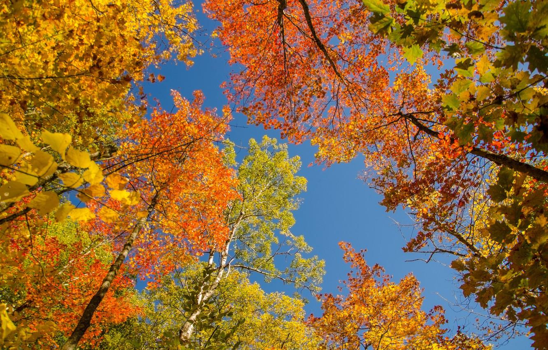 Фото обои осень, небо, листья, деревья, крона