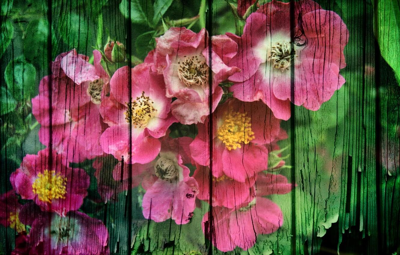Фото обои цветы, стиль, фон, доски