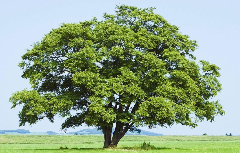Дерево картинки для фото