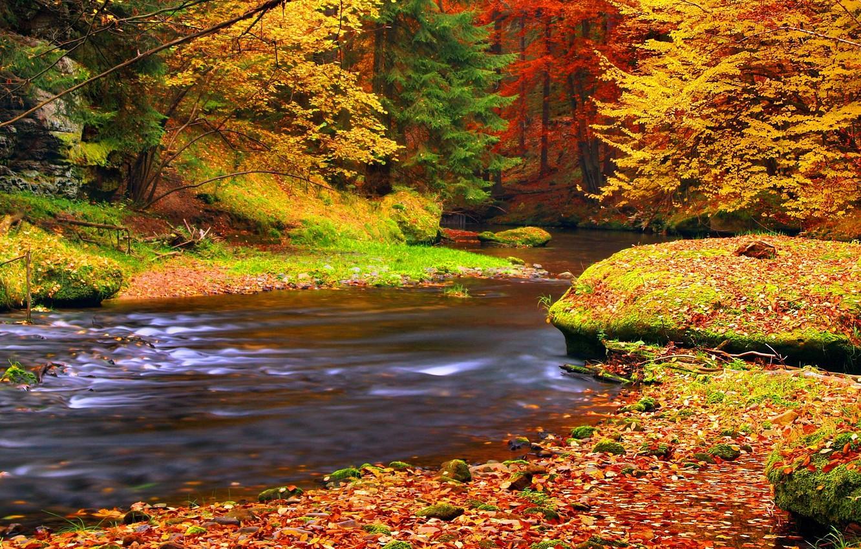 может картинки на телефон красивые природа осень того, как