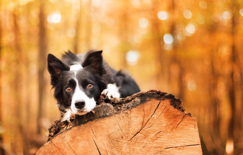 деревья картинки с собаками нас