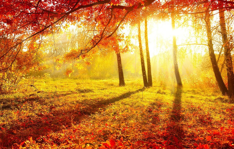 Обои осень, красиво. Природа foto 16