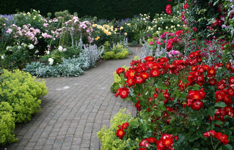 Фото обои цветы, розы, дорожки, сад, Великобритания, Devon, разноцветные, кусты, Rosemoor Garden