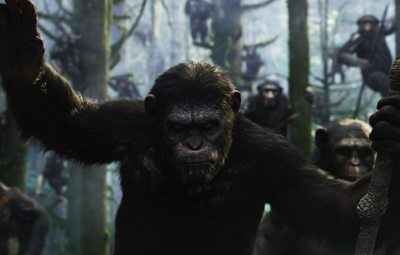Фото обои обезьяна, monkey, Цезарь, Caesar, шимпанзе, Планета обезьян: Революция, Dawn of the Planet of the Apes, …