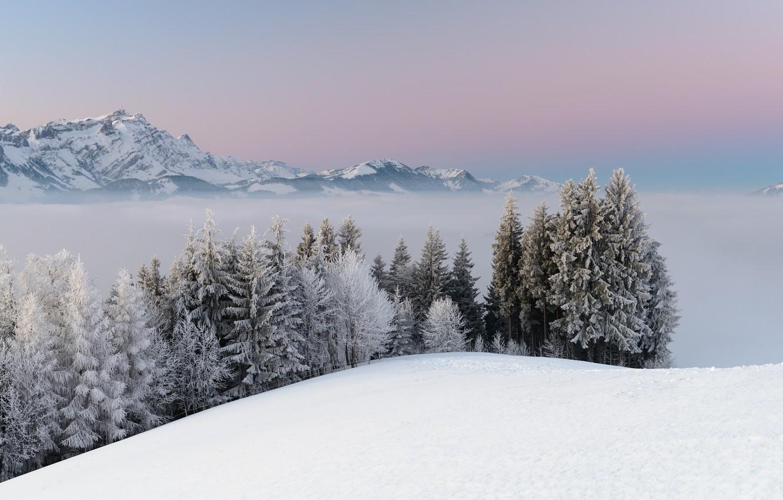 Фото обои зима, снег, деревья, пейзаж, горы, природа, туман