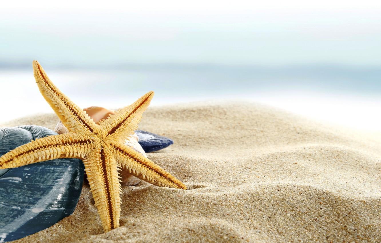 Фото обои песок, море, пляж, берег, ракушки, summer, beach, sea, blue, sand, shore, paradise, starfish, seashells