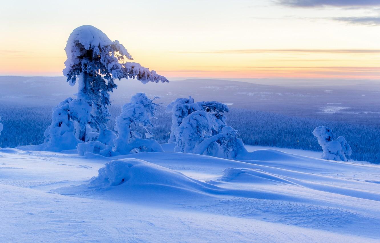 Фото обои зима, снег, деревья, панорама, сугробы, Финляндия, Finland, Lapland, Лапландия, Ylläs, Юлляс