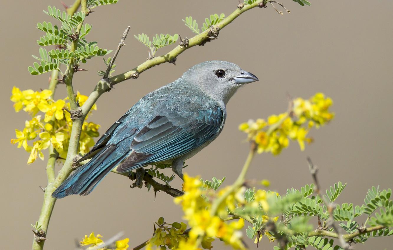 Фото обои цветы, птица, ветка, перья, клюв