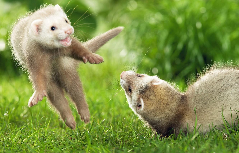 Игра Прыжки Животных