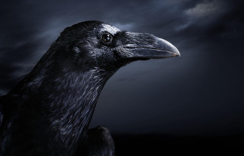Фото обои ночь, птица, ворон