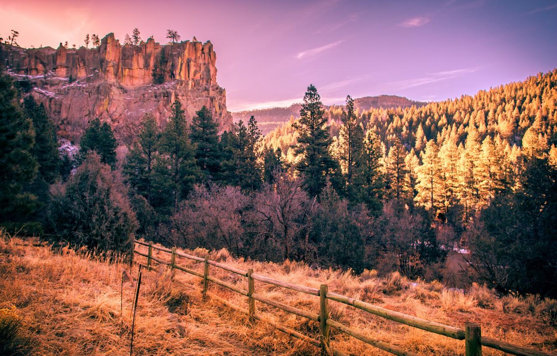 ряды американский лес фото чужеземных