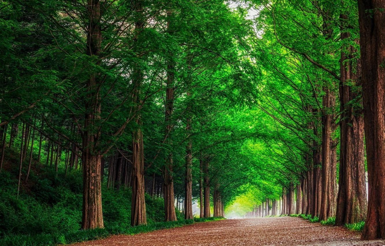 Фото обои дорога, лес, пейзаж, природа