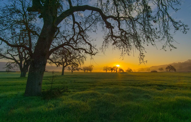 Фото обои трава, закат, горы, дерево