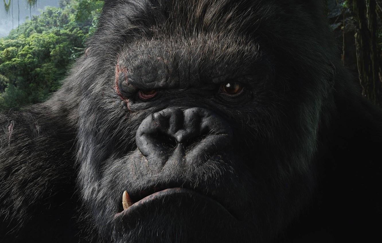 Фото обои кино, фильм, Кинг-Конг, King Kong