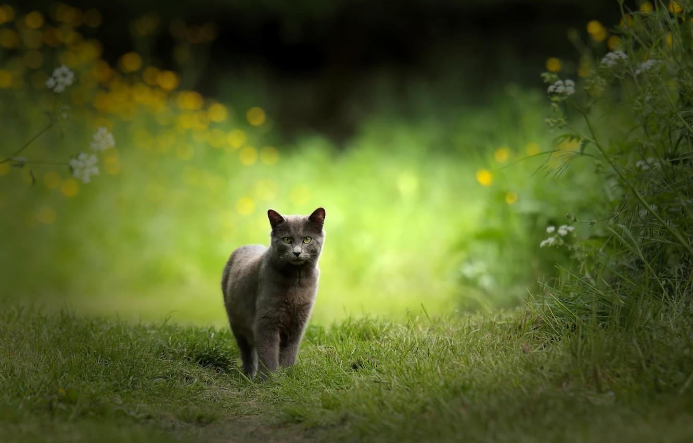 механизма терморегуляции красивые картинки кошки на природе вывел оффшор