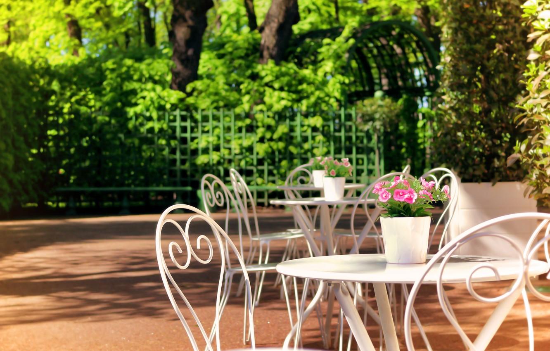 Фото обои солнце, цветы, листва, Санкт-Петербург, Летний сад
