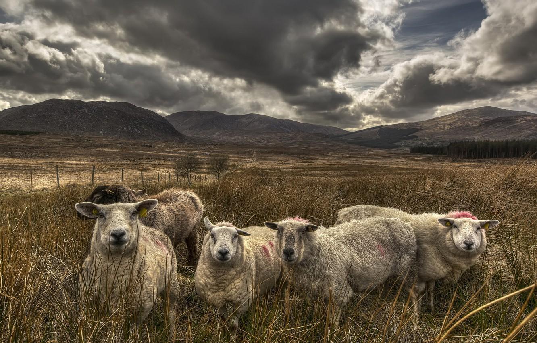 только недавно овца обои на рабочий стол шогенцукова проработала мэрии