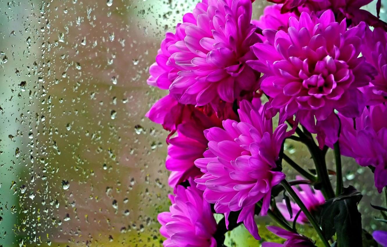 Обои капли. Цветы foto 12