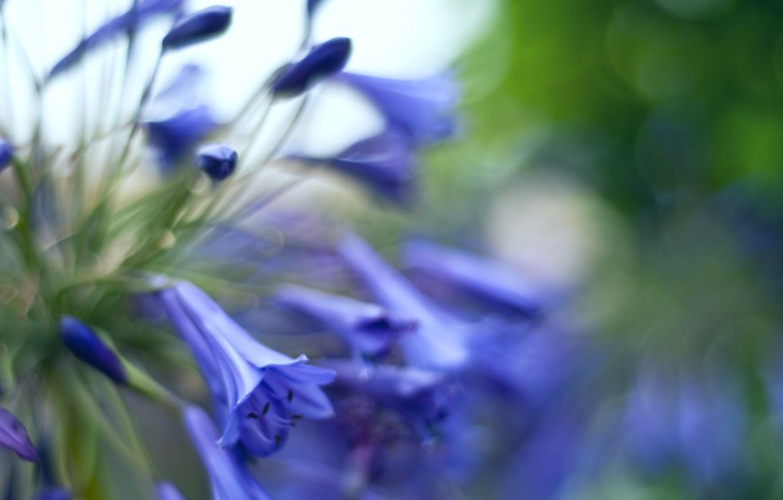 Фото обои макро, блики, размытость, Колокольчики, цветочки, бутоны, синие