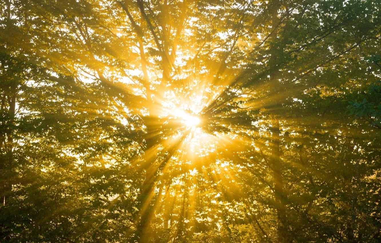картинки лето свет солнце гитлер-кот другие животные