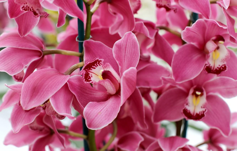 орхидея розовая картинки мужем, двое