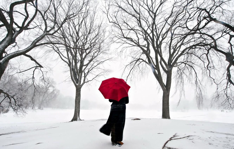 Фото обои девушка, снег, япония, зонт, сакура