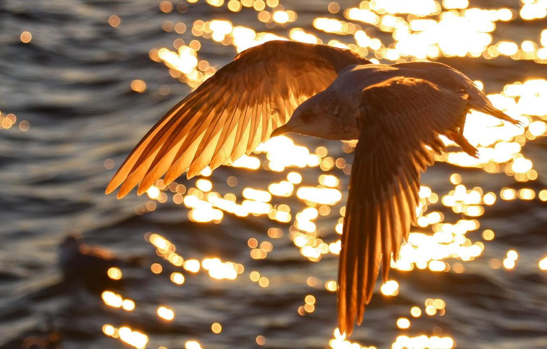 Фото обои вода, природа, птица