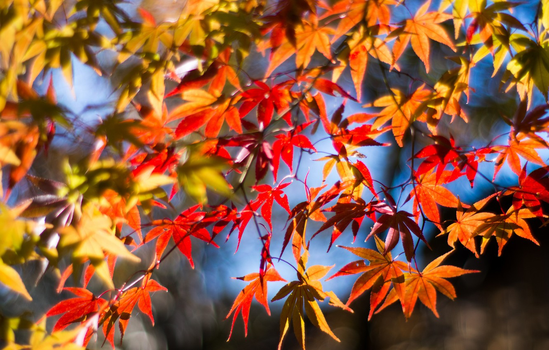 Красивые картинки осенней листвы