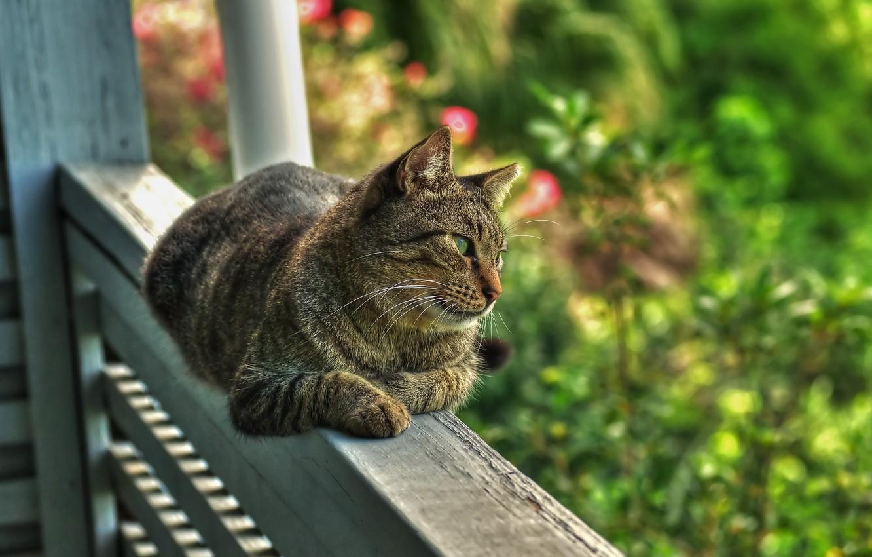 Фото обои зелень, лето, кот, природа, сад, перила, веранда, обзор территории, обои от lolita777