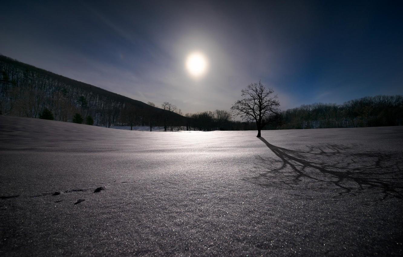 Фото обои снег, дерево, дуб