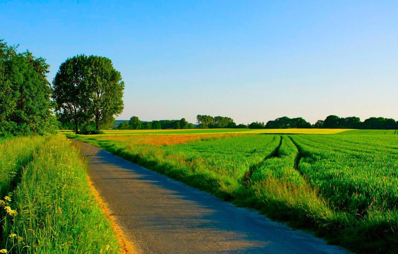 Фото обои дорога, поле, лето, трава, деревья