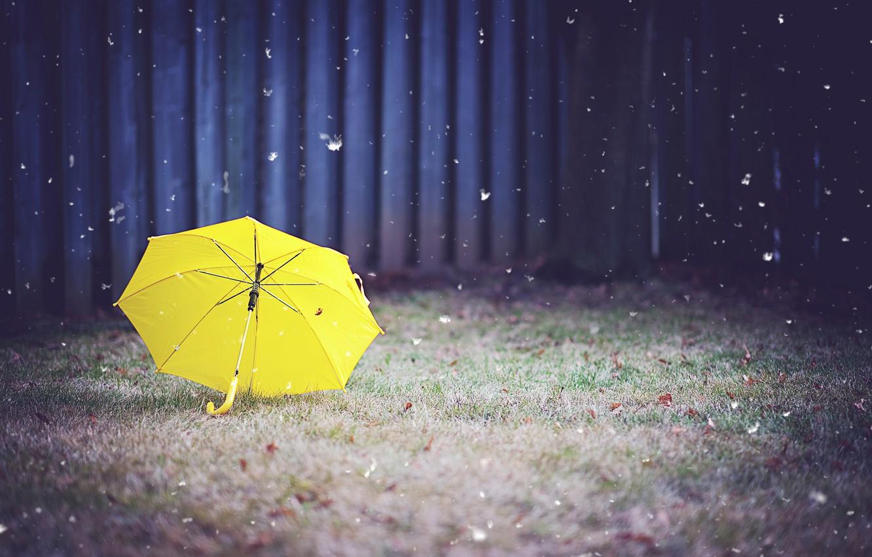 Фото обои трава, желтый, зонт, двор