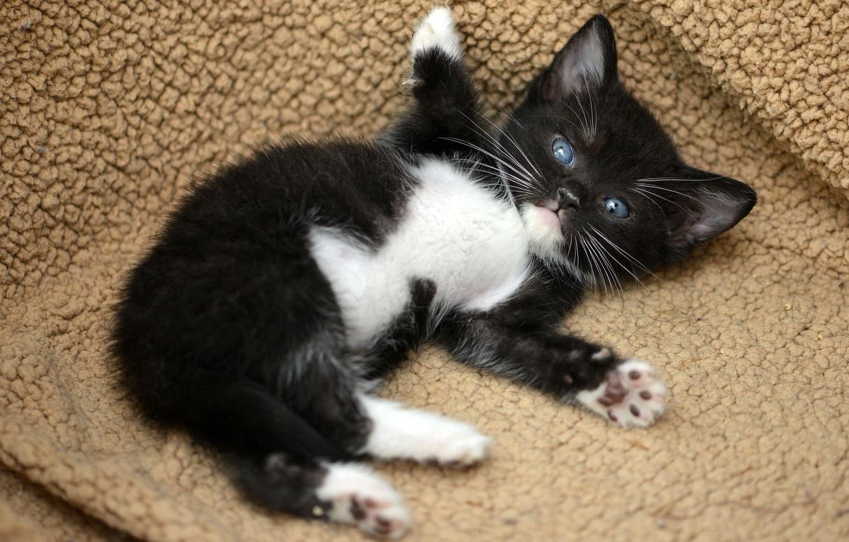 Фото обои кошка, поза, котенок, черный, лежит, смешной, мягкое местечко