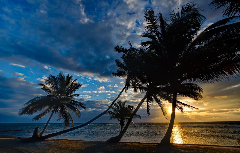 разделе картинка на сотку пальмы море один громкий роман