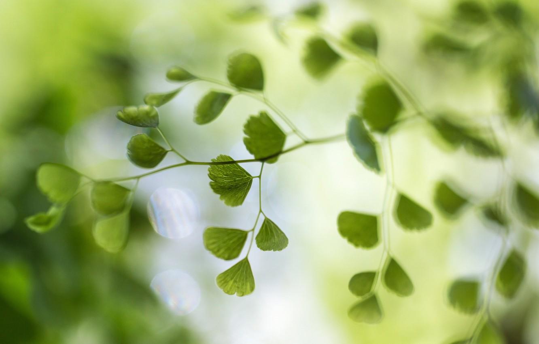 Фото обои макро, блики, фон, листва, ветка