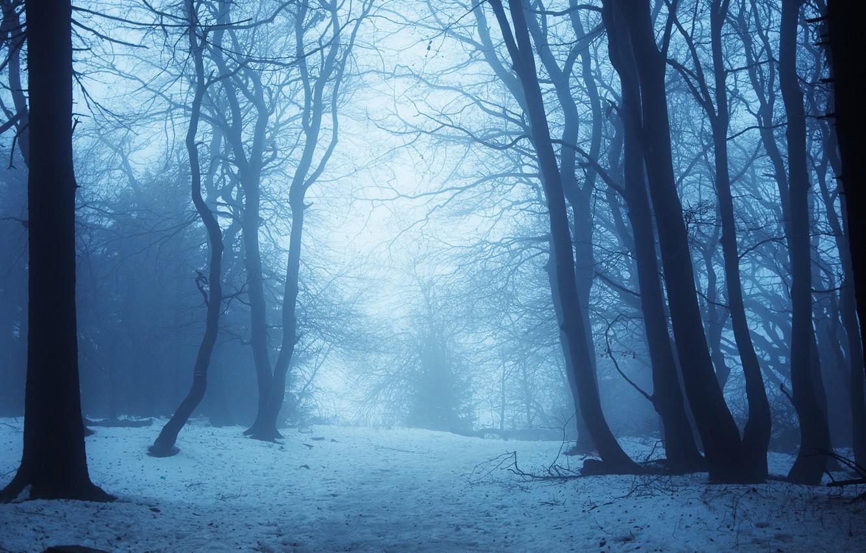 Фото обои зима, снег, деревья, сумерки