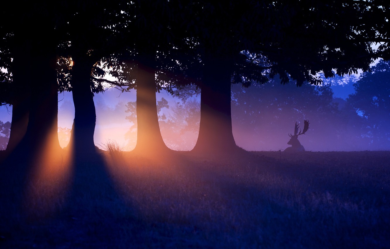 Фото обои лес, закат, природа, олень