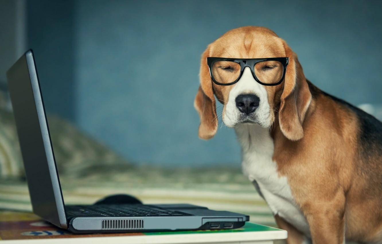 Фото обои собака, очки, ноутбук