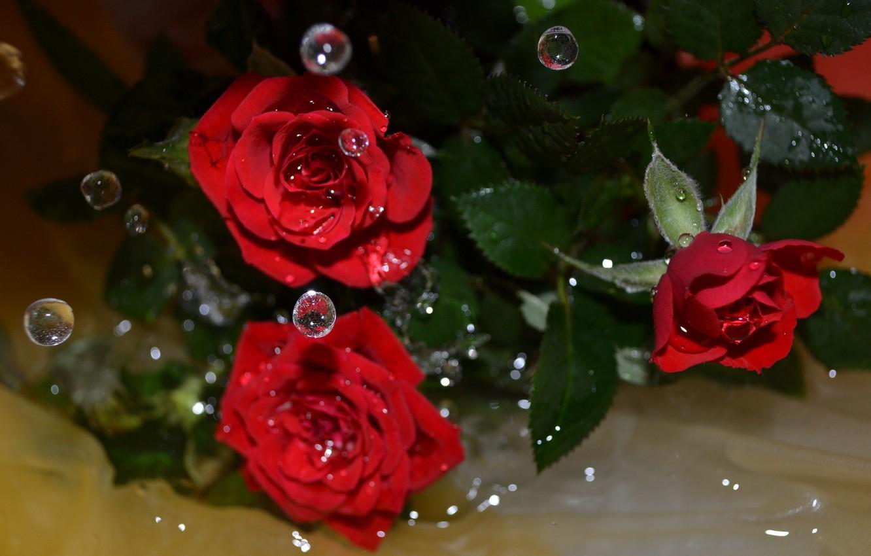 Фото обои вода, капли, цветы, розы