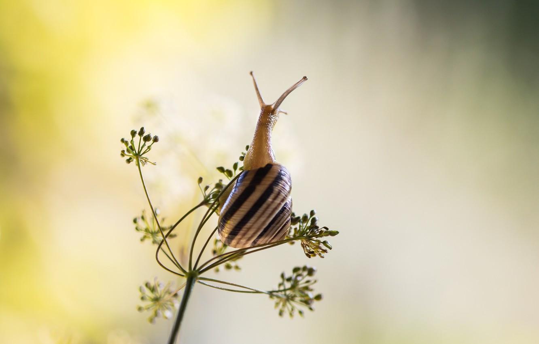 Фото обои shell, snail, buds, stalk