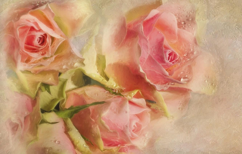 Фото обои капли, цветы, розовый, розы, текстура, бутоны