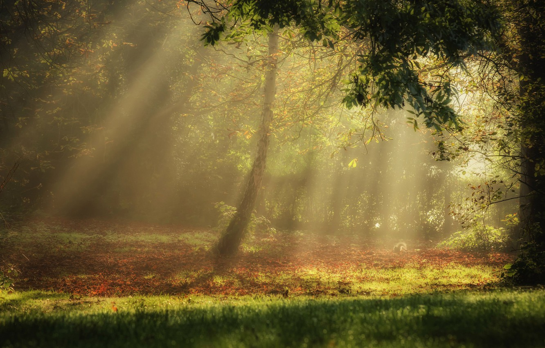 Фото обои light, forest, trees, nature, autumn