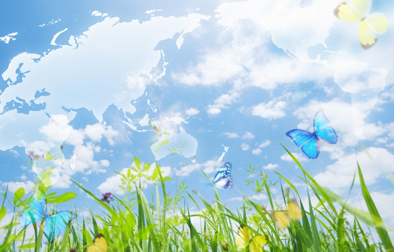 Картинки небо бабочки трава