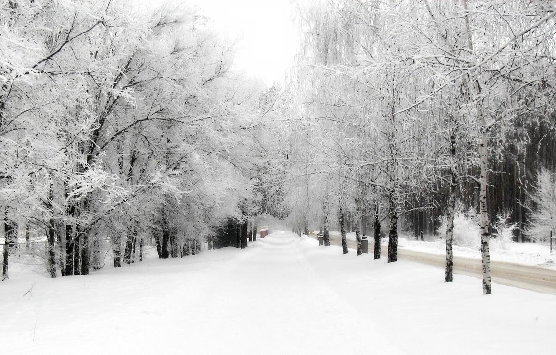 Фото обои зима, снег, деревья, природа
