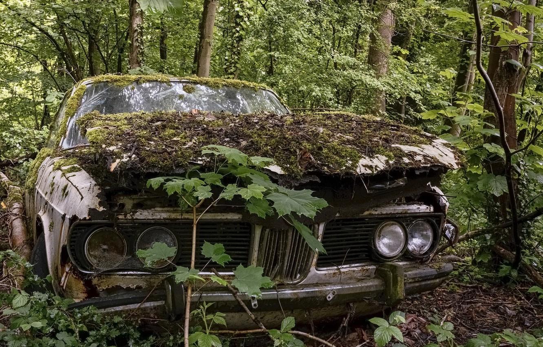 Фото обои машина, мох, лом